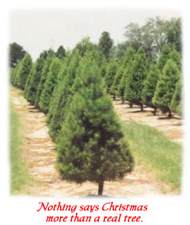the members of the association are dedicated christmas tree farmers and will provide you with a quality fresh tree please try the locator - Christmas Trees Near Me
